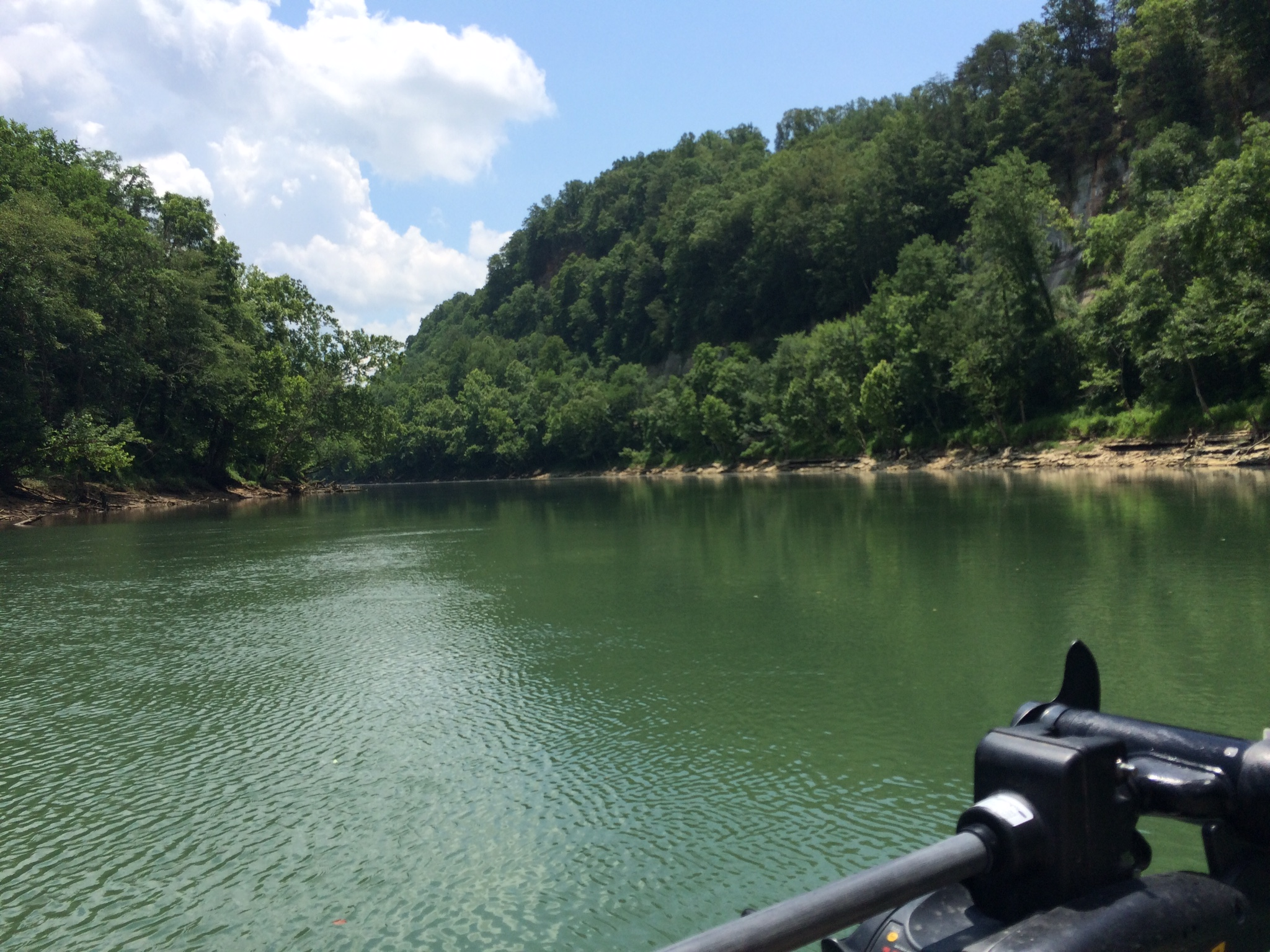 Cumberland river derby city fly fishers for Cumberland river fishing