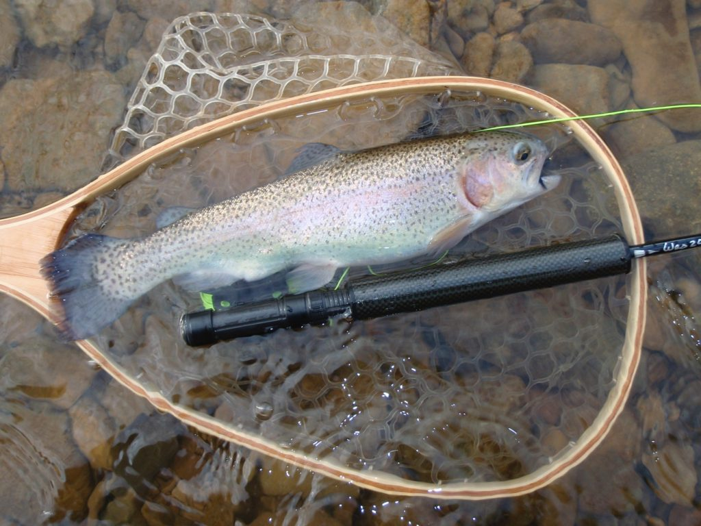 Netted Trout - 2013