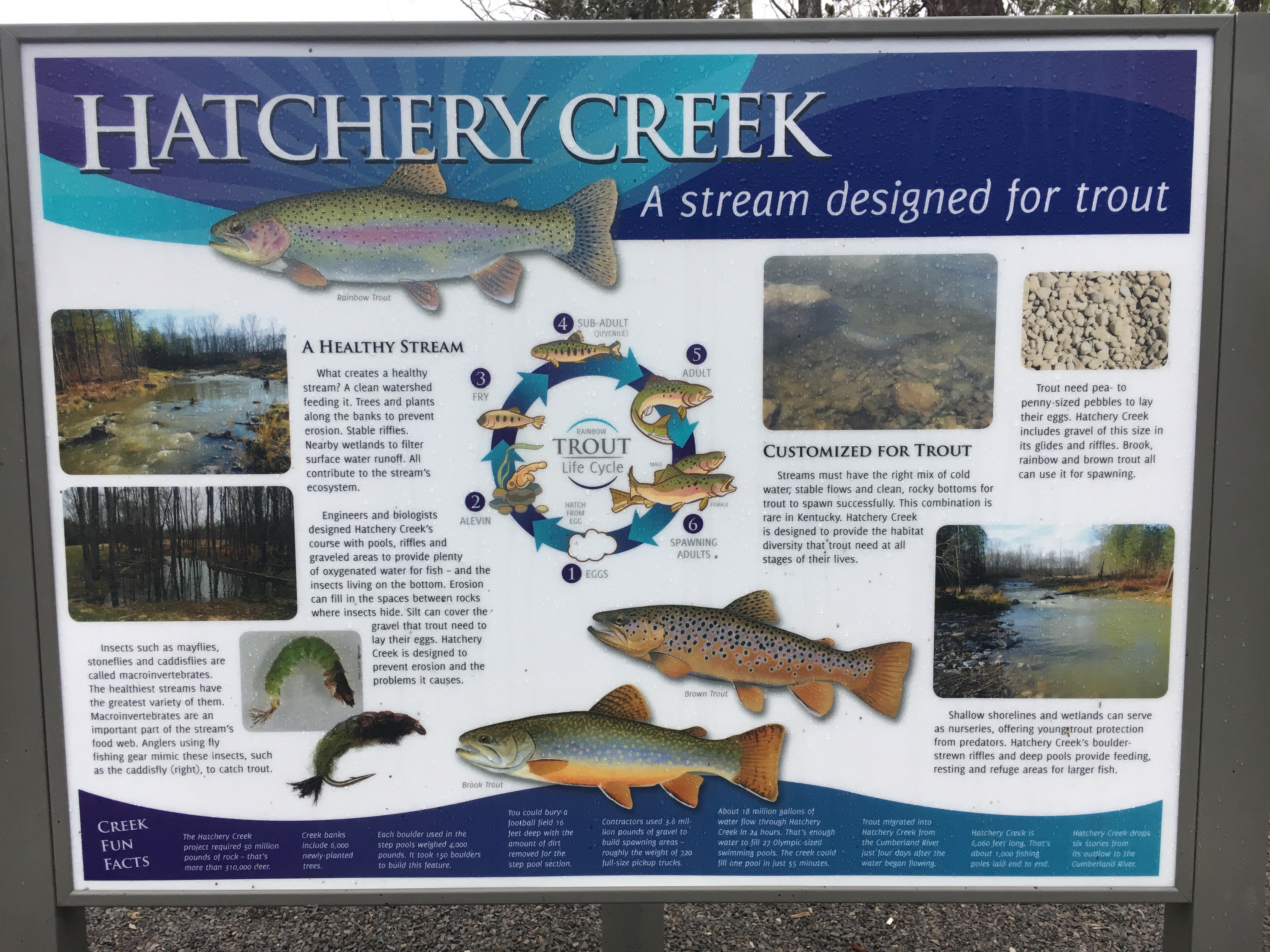 Hatchery creek derby city fly fishers for Blue creek fishing report
